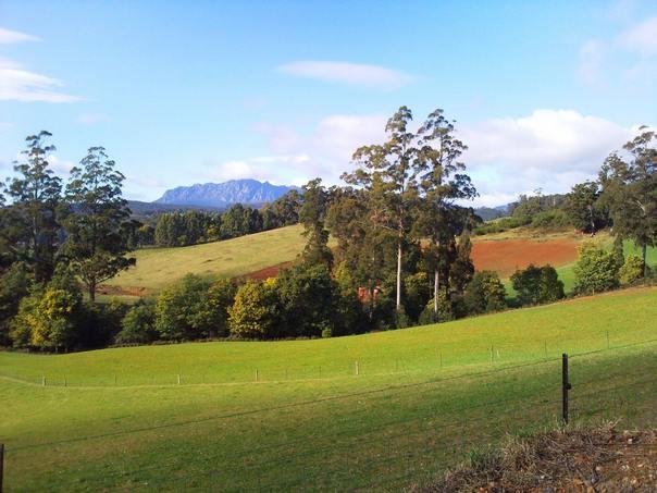 Остров Тасмания - разнообразие растительности