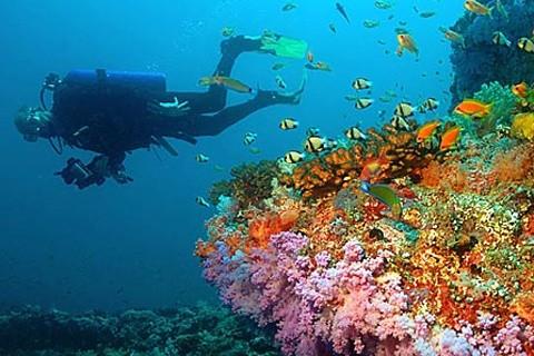 Мальдивские острова, отдых - растительный и животный мир