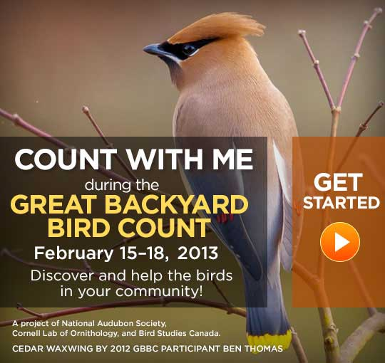 How popular is the Great Backyard Bird Count in your area? Will you participating in it this