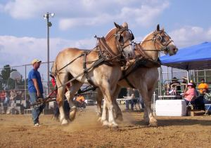 Mule Days - What did slave owners own mules for and how much were they back in those days?