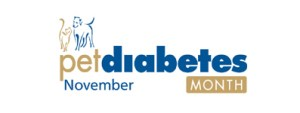 Pet Diabetes Month - How to maintain a Hamster with Diabetes?