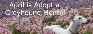Adopt A Greyhound Month - Easily frightened Greyhound?