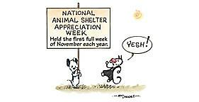 National Animal Shelter Appreciation Week - Just wanted to share with you all?