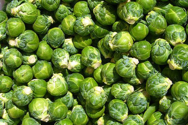 How do you grow brussel sprouts?