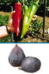 Chili Peppers and Figs Month - Need to loose weight. 5kg at least in one month. Please help guys.?
