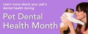 National Pet Dental Health Month - What dog treats are good for a dog with really bad breath, he also has a bad stomache sometimes?