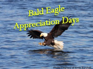 Bald Eagle Appreciation Days - what are some random national days?