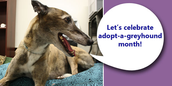 For everyone who adopted a greyhound?