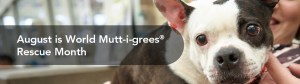 World Mutt-i-grees Rescue Month - August is World Mutt-i-grees®