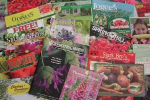 National Mail Order Gardening Month - January is national what month in the US?