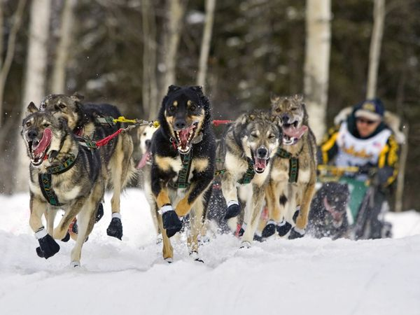 When was the first iditarod race run?