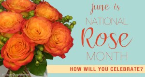 National R.O.S.E. Month - Should I go into the National Guard or the U.S. Marines?