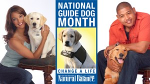 National Guide Dog Month - Labradoodles as guide dogs?