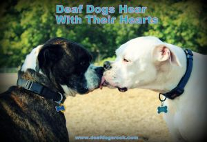 Deaf Dog Awareness Week - To people who say the homosexual lifestyle is being taught in schools?