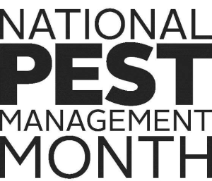 National Pest Management Month - What's the deal with bed bugs? How do you know if you have them?