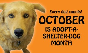 Adopt A Dog Month - Help with adopted dog?