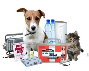 Pet First Aid Awareness Month - how do you become a registered Charity?