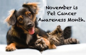 Pet Cancer Awareness Month - Did you know that it is pet cancer awareness month?