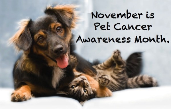Did you know that it is pet cancer awareness month?