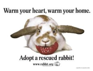 Adopt A Rescued Rabbit Month - Heartland Rabbit Rescue - the