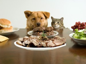 National Go Cook For Your Pets Day - can pet waste cause hemolytic uremic syndrome?