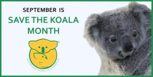 Save The Koala Month - Would you please help save Australia's Koalas?