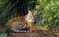 National Save A Tiger Month - What is Best Time to Visit Jim Corbett National Park?