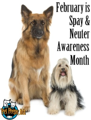 Spay Awareness Month - spaying dogs at a young age?