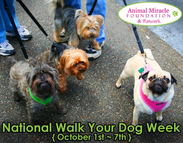 Are you celebrating with your dog National Walk Your Dog Week? Have you take any walks yet?