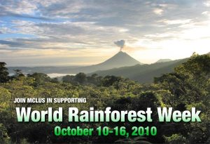 World Rainforest Week - Where's the best place to eat in Disney World?