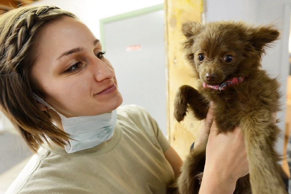 Part Time Veterinary Jobs For Parents Returning to the Workforce