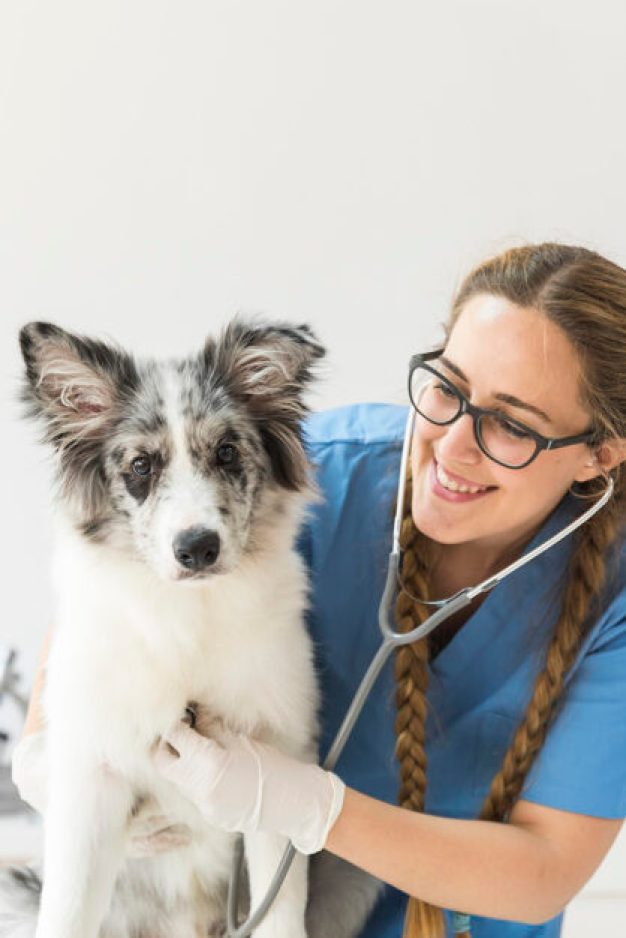 female-veterinarian-examining-dog-with-stethoscope-table-clinic_23-2147928530