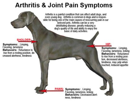 guide to pain and inflammation in pets