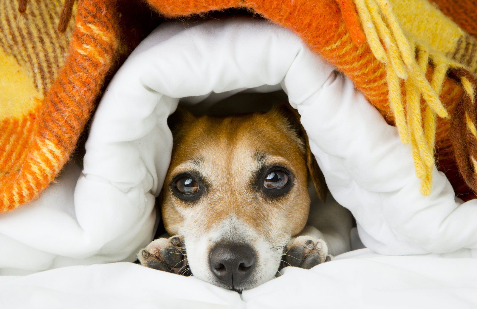 Nervous Dog Natural Home Remedies
