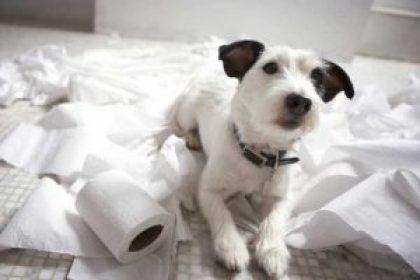 dog separation anxiety trash bathroom