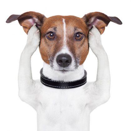 Stressed-anxious-Dog
