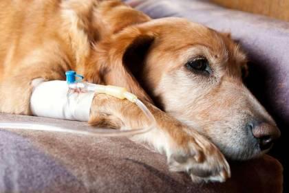 dog cancer in vet