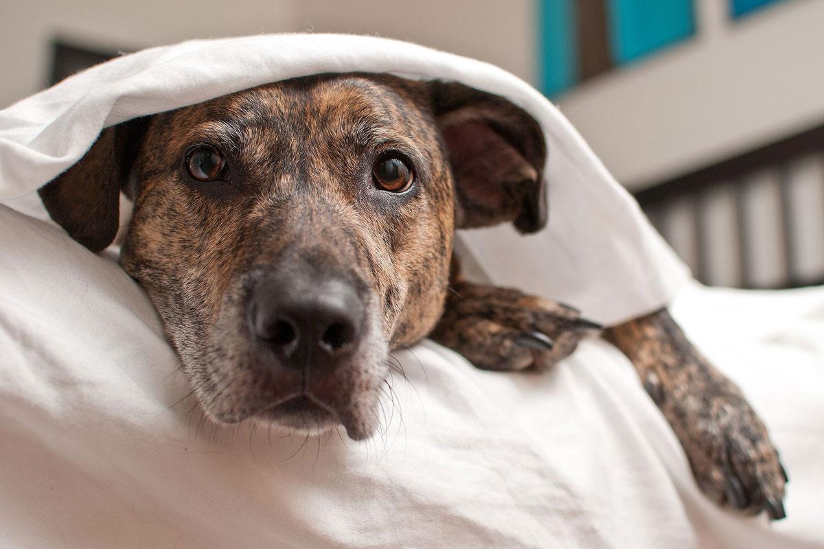 Dog-in-distress-under