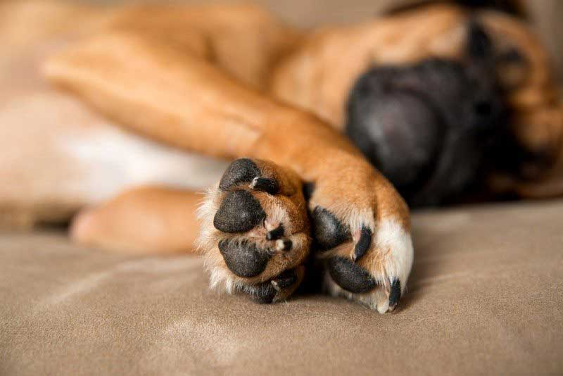 Dogs-Itchy-Paws-allergies