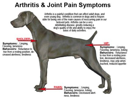 arthritis-in-dogs-symptoms