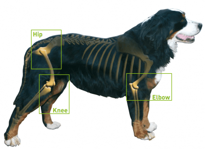 joint supplements for dogs arthritis