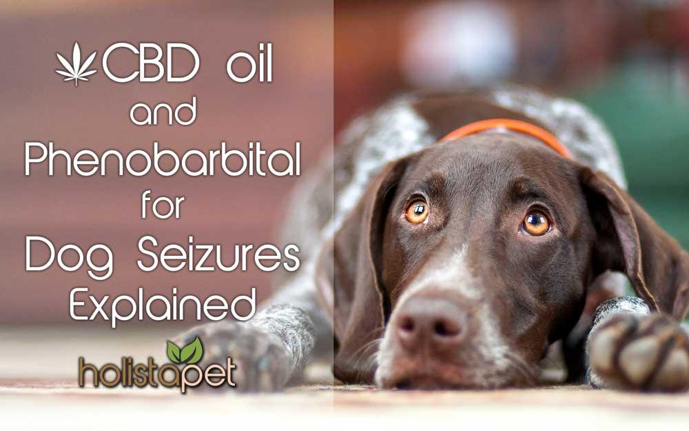 best cbd oil for dog seizures