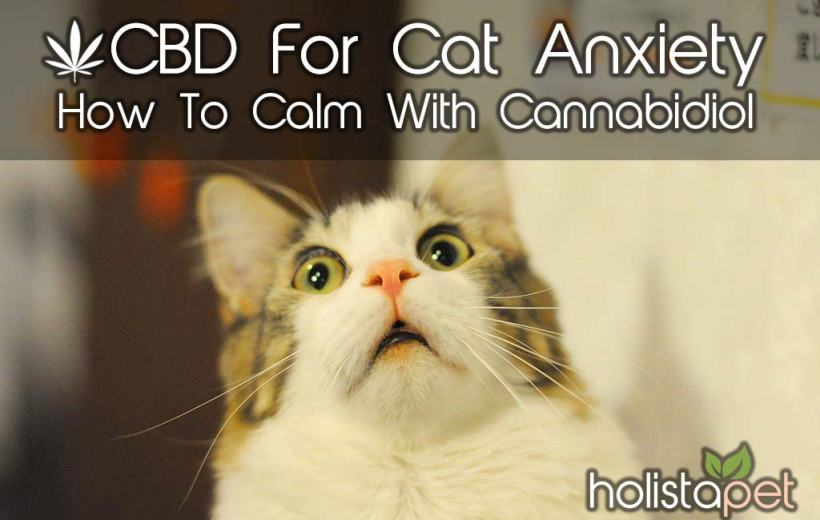 CBD For Cat Anxiety – How To Calm With Cannabidiol
