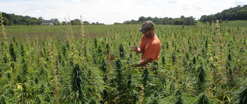 hemp-farm-bill-farmer-800