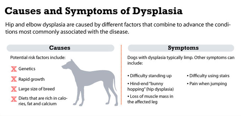 causes-and-symptoms-hip-dysplasia-in-dogs
