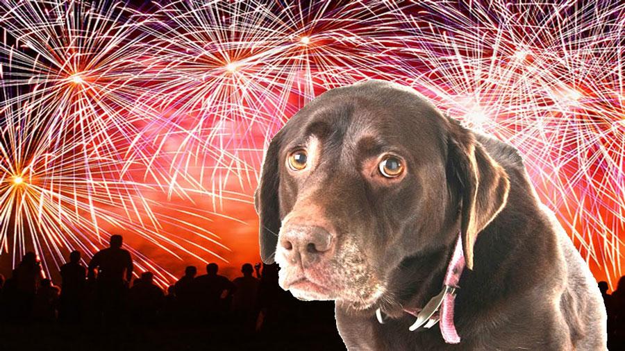 dog-scared-of-fireworks-anxiety-cbd