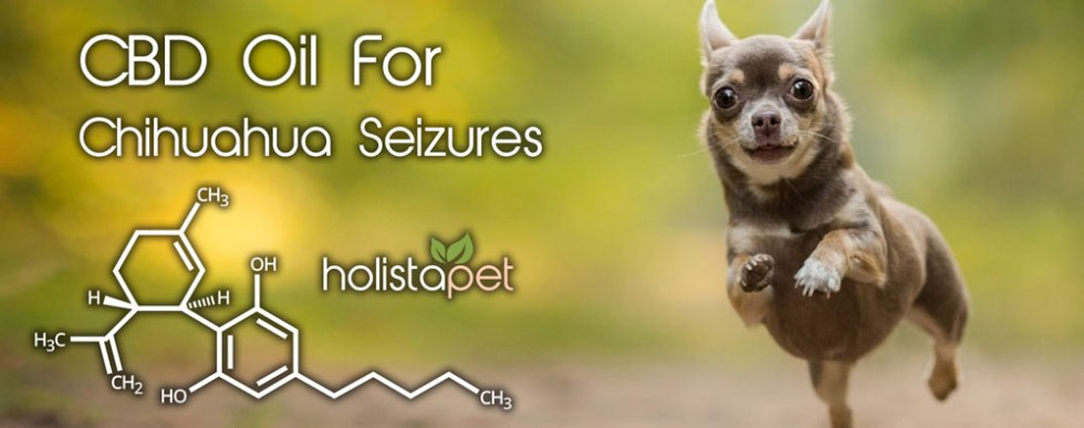 CBD oil for chihuahua seizures dog running in field