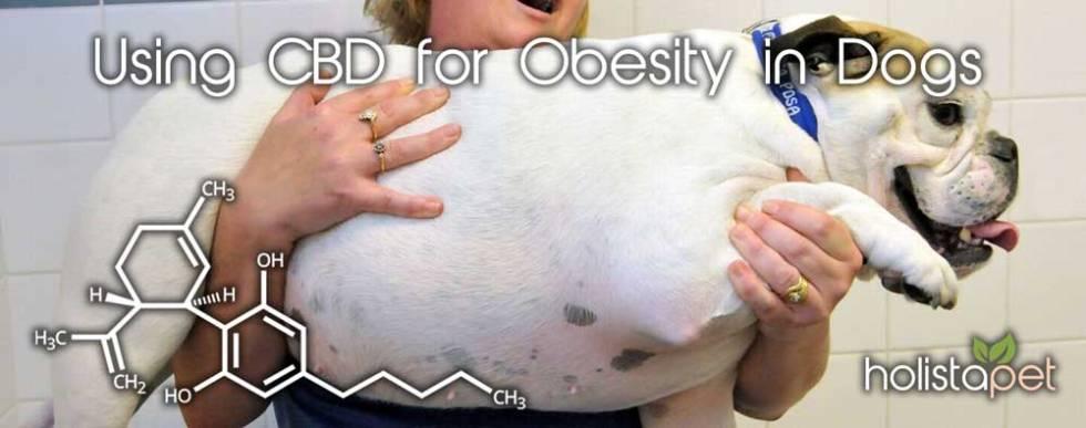 CBD for Obesity in dogs