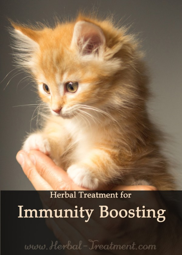 Herbal Treatment - General Immune Booster for Cats