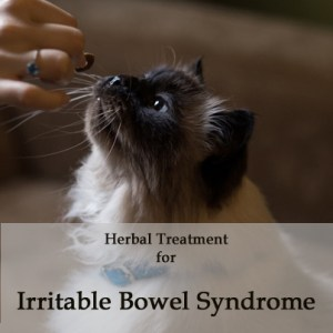 Herbal Treatment for Irritable Bowel Disease in Cats